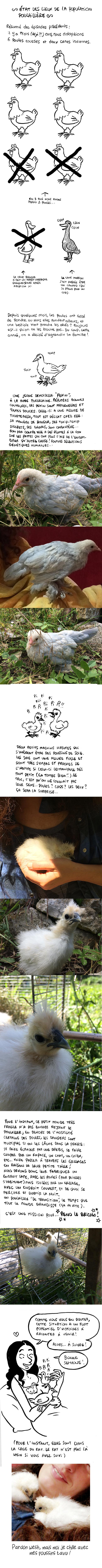 http://melaka.free.fr/blog/poussins.jpg