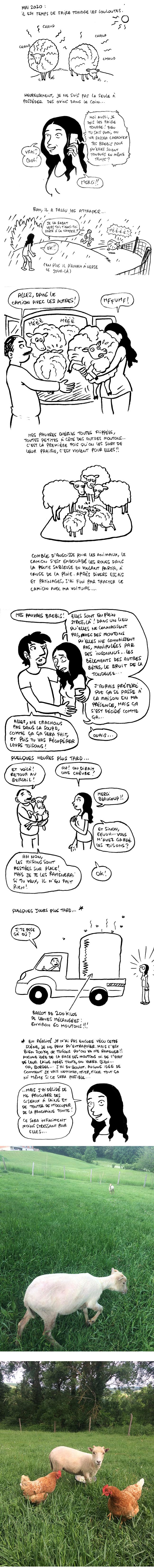 http://melaka.free.fr/blog/tonte.jpg